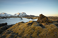 Iceland, Field of lava overgrown by moss near Dyrholaey - STCF000055