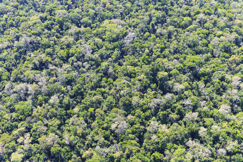 South America, Brazil, Parana, Iguazu National Park, trees at Iguazu Falls - FOF006584
