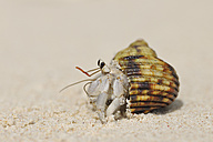 Seychelles, hermit crab on beach, close-up - RUEF001239