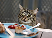Cat starring on plate with leftovers of barbecue - SLF000367