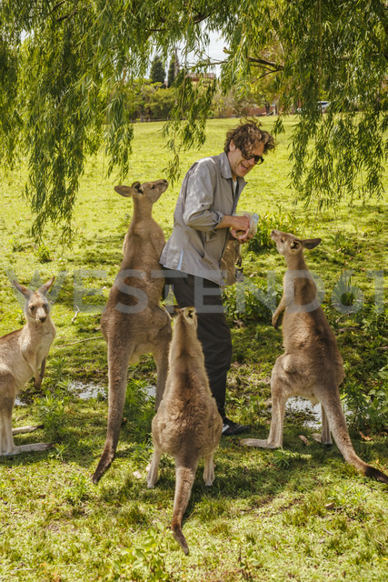 Australia, New South Wales, man feeding kangoroos - FBF000360 - Frank Blum/Westend61