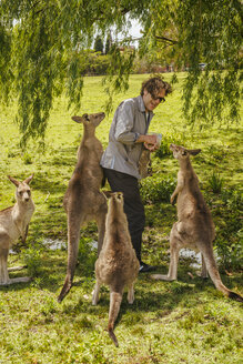 Australia, New South Wales, man feeding kangoroos - FBF000360