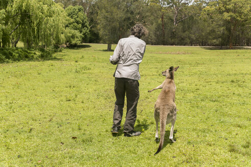 Australia, New South Wales, man feeding kangoroo on meadow - FBF000359
