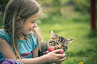 Portrait of little girl showing cat handful of strawberries - SARF000520