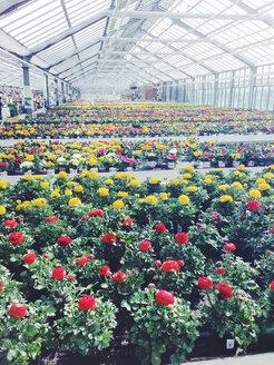 Greenhouse - AF000068