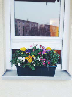 Window with flower box - AFF000050
