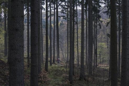 Germany, Lower Saxony, Deister, Bike Freeride in forest - MUMF000052