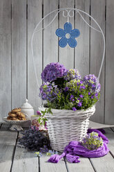 Hortensia, Hydrangea, Bellflower, Campanula, in white flower basket, purple silk cloth and lavender - CSF021270