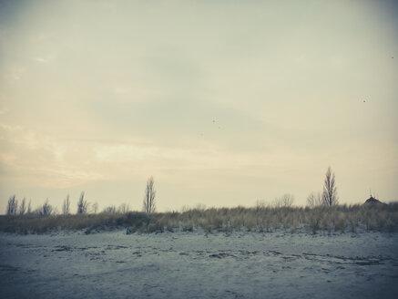 Ruegen, Baltic Sea, Mecklenburg-Vorpommern, Island, winter, Beach, sea - MJF001035