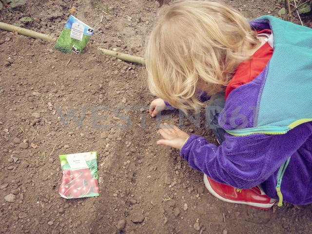 Garden, seeds, sow, herbs, bedding, spring, Saxony, Germany - MJF001067