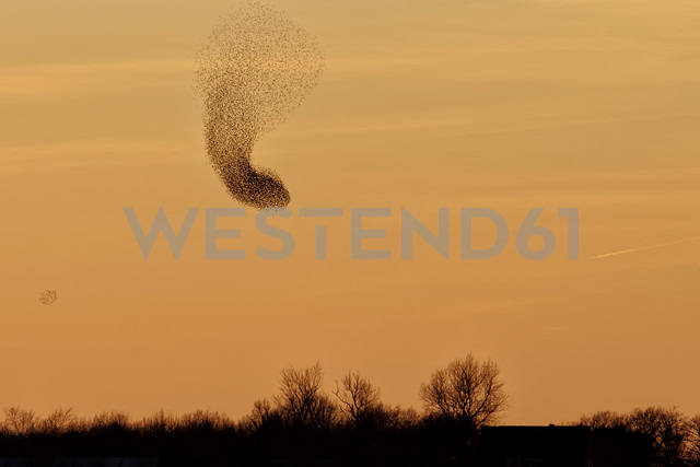 Germany, Mecklenburg-Western Pomerania, Sunset and starlings, Sort Sol - HACF000075