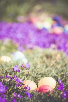 Easter eggs in garden - MJF000970