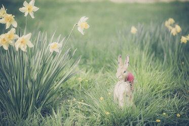Easter bunny in garden - MJF000973