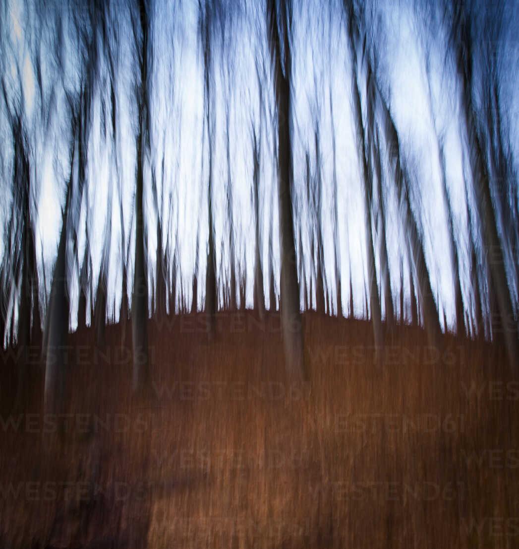 Germany, Bavaria, Trees in forest - FCF000127 - Christina Falkenberg/Westend61