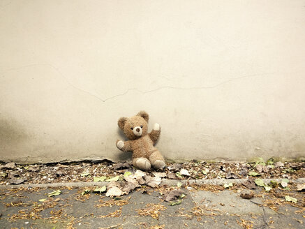 Teddy lost in the yard, Neuss, NRW, Germany - UWF000089
