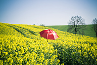 Germany, Bavaria, Rape field, Brassica Napus - SARF000547