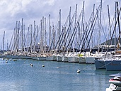 Caribbean, Antilles, Lesser Antilles, Martinique, Marina with catamarans for hire - AM002194