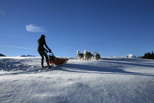 Austria, Tyrol, Kitzbuehel, dog sledge - TM000013