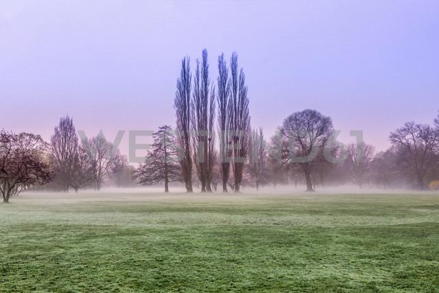 Germany, Fog over a lawn during sunrise. Hamburg - NKF000100