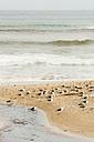 New Zealand, Chatham Island, Seagulls on sandbank at Owenga shore - SHF001231