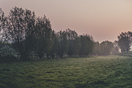 Germany, North Rhine-Westphalia, Detmold, Sunrise, Meadow with willow trees, Salix - SBDF000814