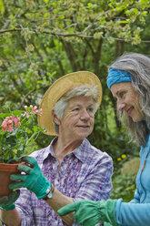 Senior mother and daughter gardening - AKF000373
