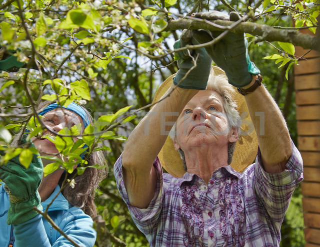 Senior mother and daughter pruning tree - AKF000372 - Andreas Koschate/Westend61
