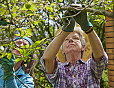 Senior mother and daughter pruning tree - AKF000372