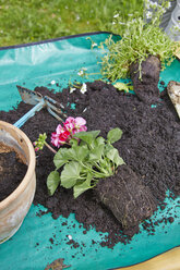Flowers with potting soil on garden table - AKF000381
