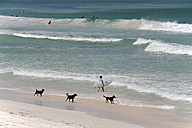 Australia, Western Australia, Lancelin, three dogs running on the beach - MIZ000470