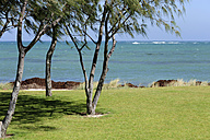 Australia, Western Australia, Lancelin, trees at a lawn on the seaside - MIZ000479
