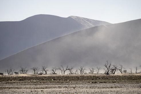 Africa, Namibia, Sossusvlei, Sandstorm, Dead trees and sand dunes - HLF000482