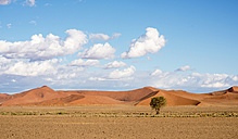 Africa, Namibia, Sossus Vlei, view to landscape with single tree and desert dunes - HLF000485