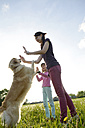 Young woman and little girl playing with Golden Retriever on meadow - BFRF000442