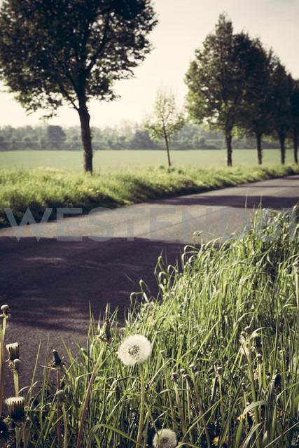 Germany, Baden-Wuerttemberg, Einsiedel near Tuebingen, Avenue in spring, blowballs, Taraxacum - LVF001232