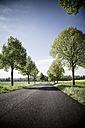Germany, Baden-Wuerttemberg, Einsiedel near Tuebingen, Avenue in spring - LVF001235