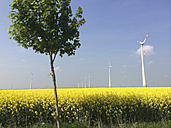 Wind turbine on a rape field in Brandenburg, Germany - FLF000420