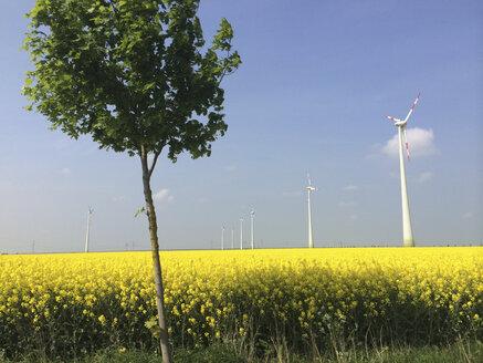 Wind turbine on a rape field in Brandenburg, Germany - FLF000420