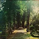 Germany, Hamburg, Wandsbek, Hinschenfelder cemetery - MMO000003