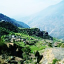 Nepal, Langtang Region, rice terraces - MMO000322