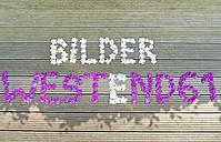 Writing Bilder Westend61 made from flowers - HLF000508