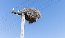 Namibia, Damaraland, Community nest of weaver birds - HLF000509