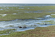 Namibia, Walvis Bay, Lagoon landscape with water and marsh grass - HLF000513