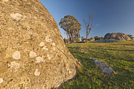 Australia, New South Wales, Arding, dead wood, eucalyptus trees and boulders in the morning sun - SH001311