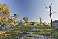 Australia, New South Wales, Arding, dead wood, eucalyptus trees and boulders in the morning sun - SHF001314