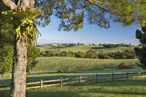 Australia, New South Wales, Dorrigo,  landscape in the morning light - SHF001324