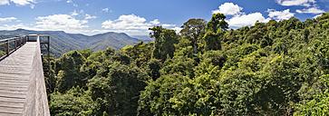 Australia, New South Wales, Dorrigo, rainforest canopy and the skywalk in the Dorrigo National Park - SHF001325