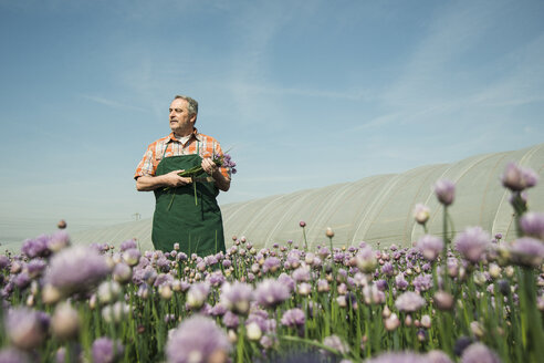 Germany, Hesse, Lampertheim, farmer harvesting chives, Allium schoenoprasum - UUF000587