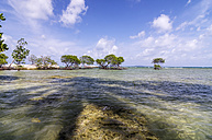 Indonesia, Riau Islands, Bintan, Nikoi Island, Mangroves at beach - THAF000353