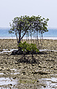 Indonesia, Riau Islands, Bintan, Nikoi Island, Mangroves - THAF000369